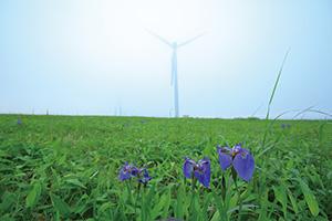 トドック電力の風力発電